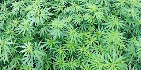 Pennsylvania Medical Marijuana Dispensary Training Webinar - Aug 21st boletos