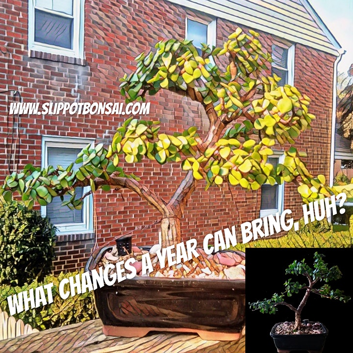 Wiring Bonsai for Style at Midnight Oil image