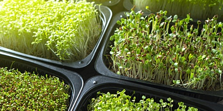 FREE Workshop: Growing Microgreens with the Heartbeet Community Farm billets