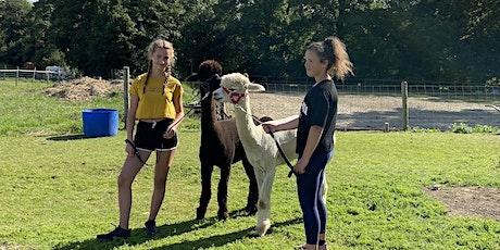 Alpaca walk tickets