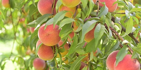 Just Peachy Day On the Orchard tickets