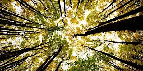 """Bain de forêt entre femmes """"Vivre c'est maintenant"""" billets"""