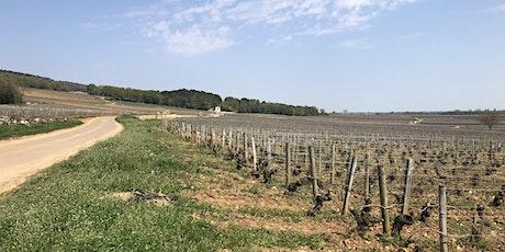 Blind wine tasting: France vs. the World billets