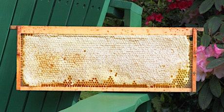 Albury Beekeepers June Meeting :Frame Making & Hive Beetles tickets