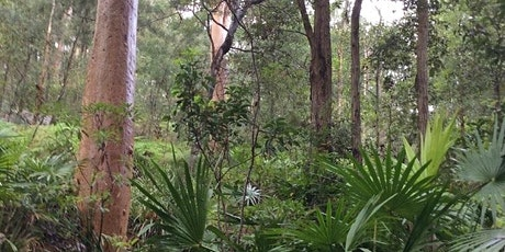Guided Bushwalk to Ferndale Park Chatswood tickets