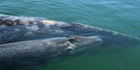 Gray Whales and the Changing Environment tickets