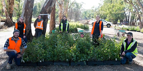 Cudlee Creek bushfire recovery native plant giveaway (LIMIT 2/property) tickets