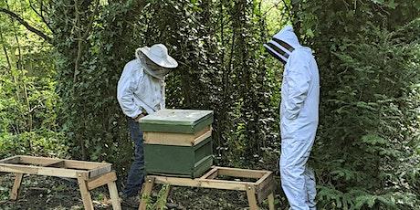 NATIONAL VOLUNTEER WEEK SPECIAL: 'MEET THE BEES' (STAA Volunteers only) tickets