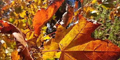 Gardening Lady Autumn Foraging Walk  with Lunch tickets