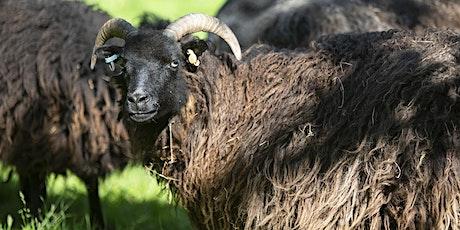 Beginner Sheep Course tickets