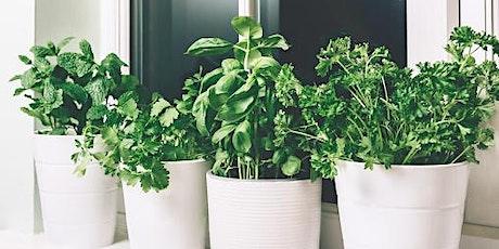 Container Kitchen Herb Garden* - An Online Workshop tickets
