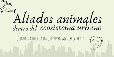 Aliados animales dentro del ecosistema urbano entradas