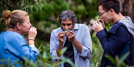 Aboriginal Cultural Landscape Walking Tour tickets