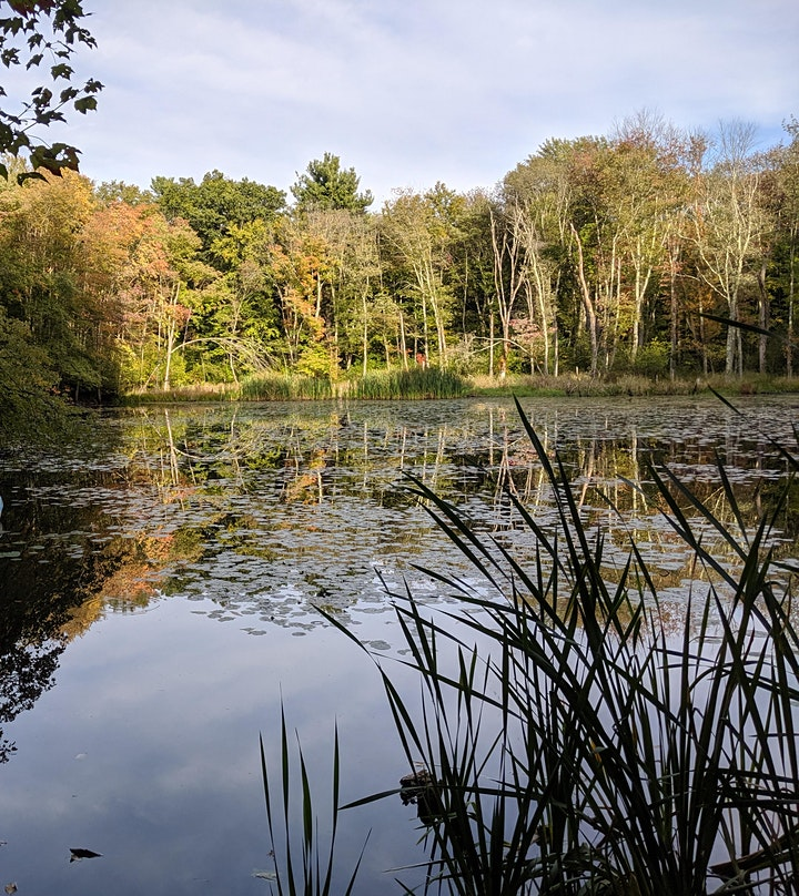 Beals Preserve Guided Hike: A Walk in the Woods image