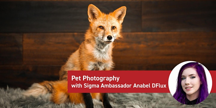 Sigma Demo Days image