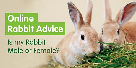 Online Rabbit Advice, Is my Rabbit Male or Female? tickets