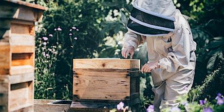 Introduction to Beekeeping Course / Cwrs Cyflwyniad i Gadw Gwenyn tickets