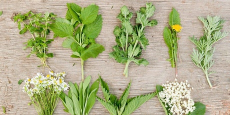 Healing Herbs and Holistic Health tickets