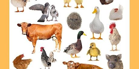 Animal Tales tickets