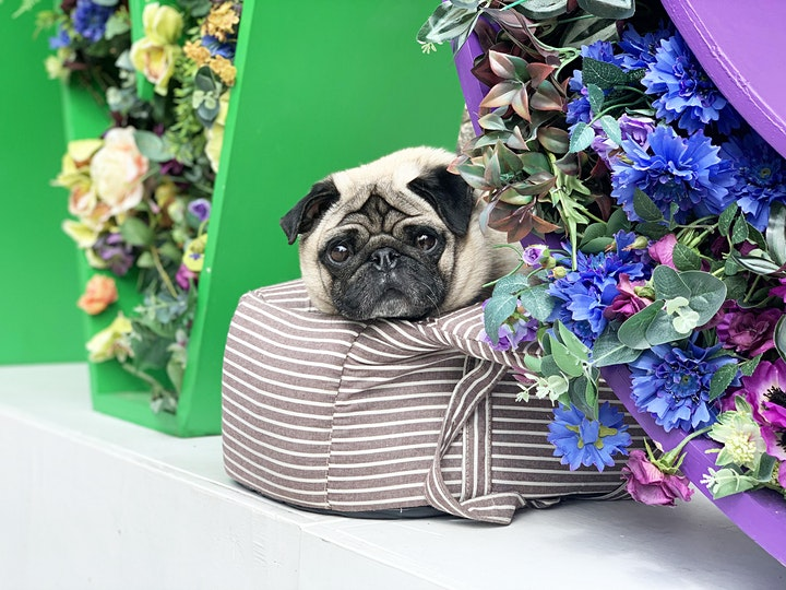 Open Air Dog Cafe & Pupuccino Bar at Westquay Southampton image