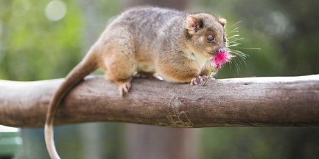 NaturallyGC Wildlife Encounters tickets