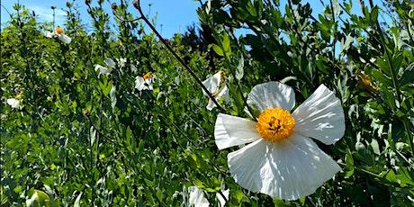 Alemany Farm Native Plant Volunteer Day tickets