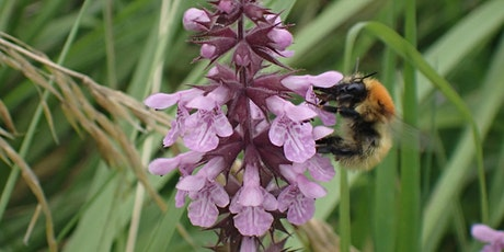 North East Bee Hunt at Lindisfarne tickets