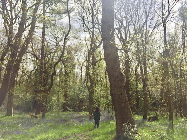 Woods Wellbeing - Forest Bathing / Shinrin Yoku image