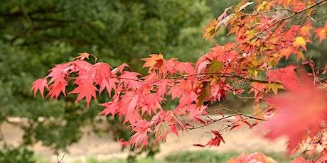 Autumn Yorkshire Arboretum Photography Workshop tickets