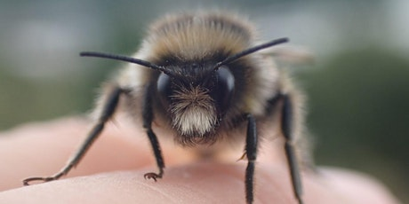 North East Bee Hunt at Watergate Forest Park tickets