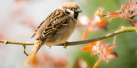 Health and Birdwatching - a gentle walk around Cally Park tickets