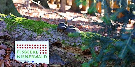 Wir machen Kleinwälder vielfältig & zukunftsfit Tickets