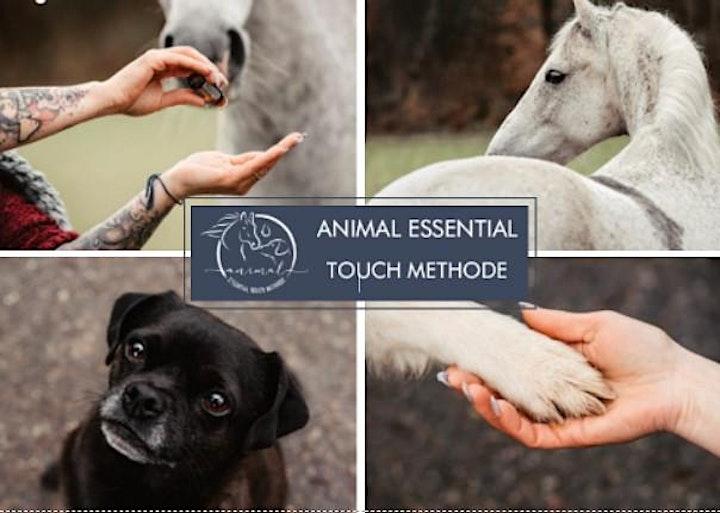 Animal Essential Touch Methode - Ausbildnerkurs: Bild