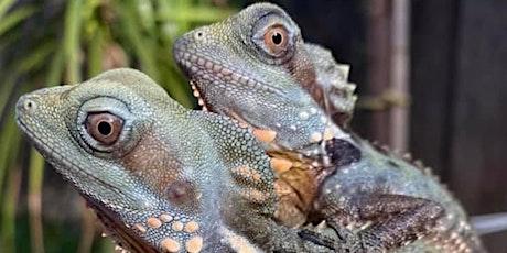 Show Me Reptile & Exotics Show Louisville tickets