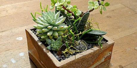 Virtual Discover Succulents Class - Sun , Jul 18th tickets