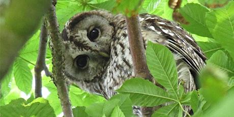 The Wild World of Birdsong | Edinburgh Science Festival tickets