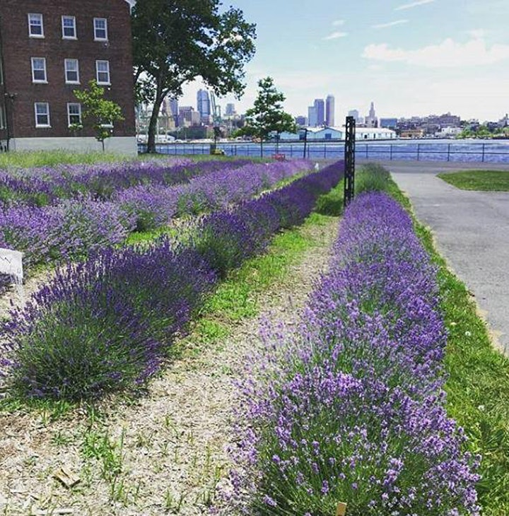 NYC Lavender Festival and Ju-Bee- Lee: Bouquet  Harvest NYCHA/SNAP Members image