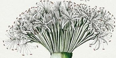 Botanical Drawing Outdoors tickets