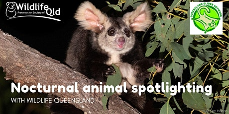 Nocturnal Animal Spotlighting with Wildlife Queensland tickets
