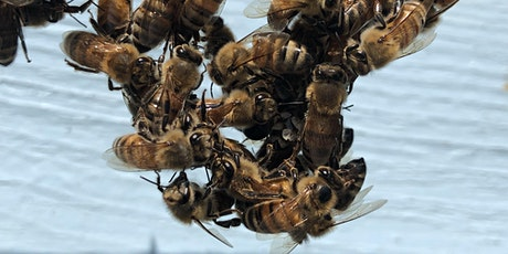 Dr. Jerry Hayes, Editor of Bee Culture magazine. Q&A tickets