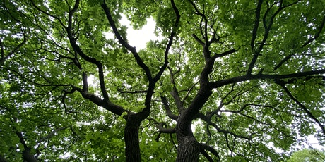 """Intro to Forest Therapy: """"Belonging"""" at Beaubien Woods tickets"""