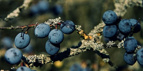 Winter Foraging with Fred Gillam tickets