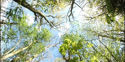 LISW Webinar – Climate Change, Trees & Vegetation