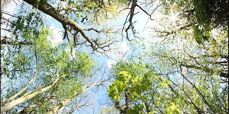 LISW Webinar - Climate Change, Trees & Vegetation tickets