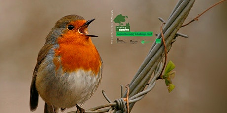 Healing Nature – Wildlife Walk at Colliery Wood tickets
