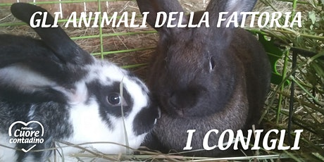 Weekend in Fattoria: i conigli curiosoni biglietti