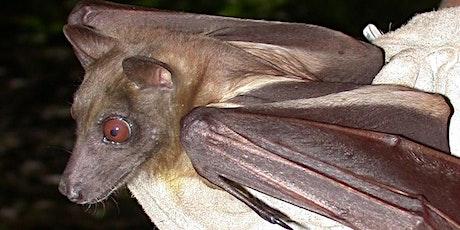 EcoTalk and Walk: Bats! tickets