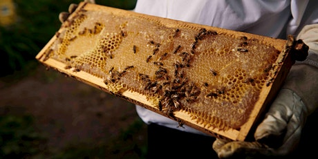 NYC Lavender Festival and Ju-Bee-Lee: Hive Dive tickets
