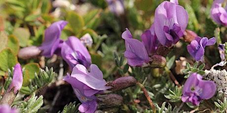 CRAGS online workshop: Identifying Native Wildflowers tickets