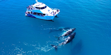 Hervey Bay Whale Watching Day Tour (from Brisbane) tickets